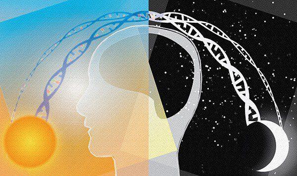 Đồng hồ sinh học không chỉ ảnh hưởng đến giấc ngủ của bạn, và tiết lộ cả tương lai của chúng ta 5