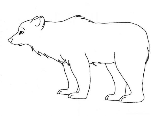 Download tranh tô màu con vật cho bé 2-5 tuổi 59
