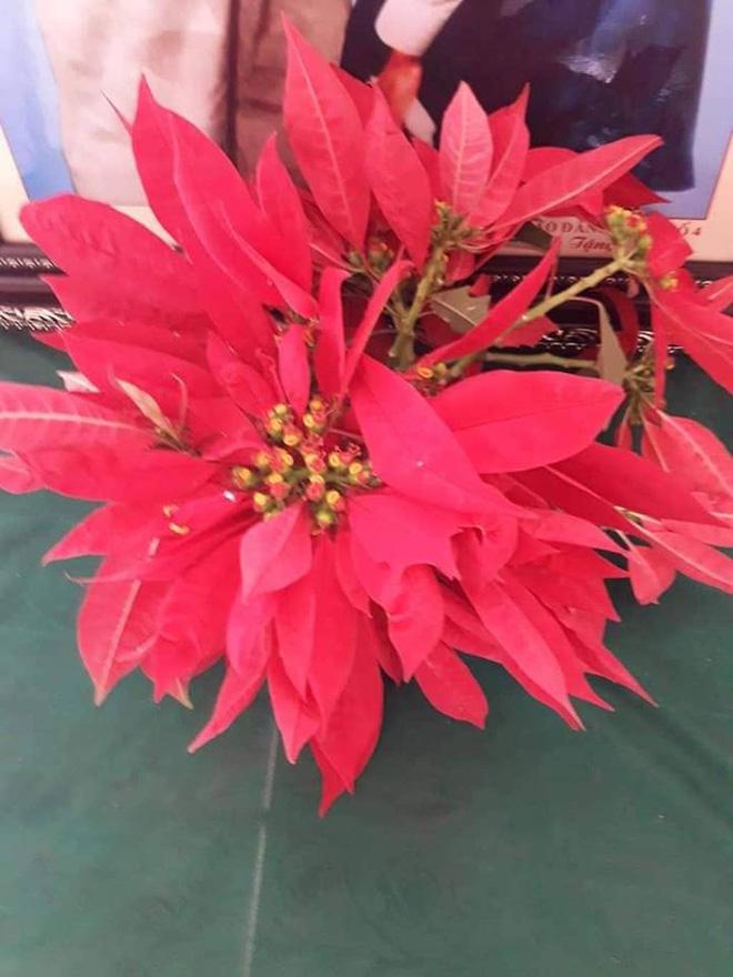 Món quà giản dị đầy ý nghĩa của học sinh vùng cao hoa dại, rau cải, chuối tặng ngày 20/11 khiến cô mừng phát khóc 5