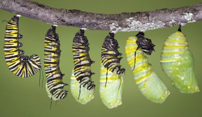 GIÁO ÁN KHÁM PHÁ KHOA HỌC- Đề tài:Vòng đời phát triển của con bướm 9