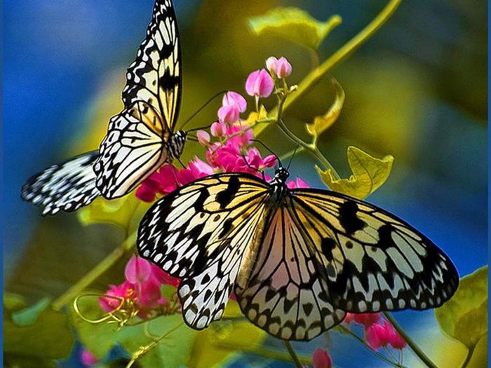 GIÁO ÁN KHÁM PHÁ KHOA HỌC- Đề tài:Vòng đời phát triển của con bướm 11