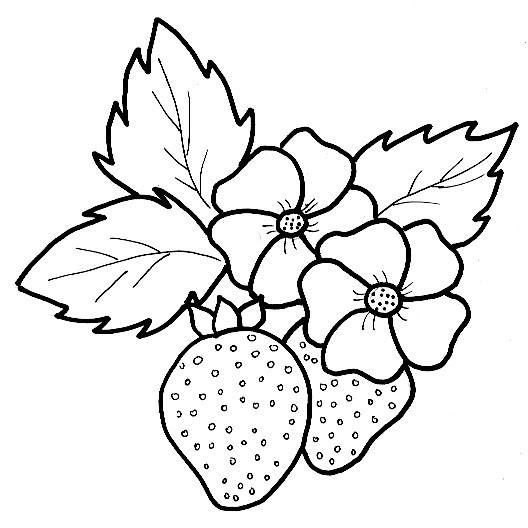 Tranh tô màu quả dâu tây dành cho bé tập tô tăng trưởng trí thông minh 15