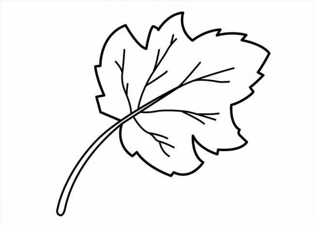 tranh tô màu lá cây nho