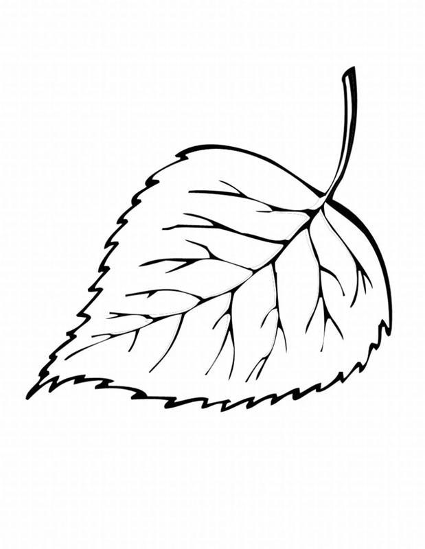 hình ảnh lá cây dâu tằm