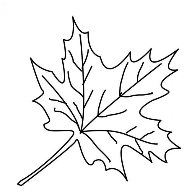 Bộ tranh tô màu lá cây dành cho bé tập tô làm quen nét 6