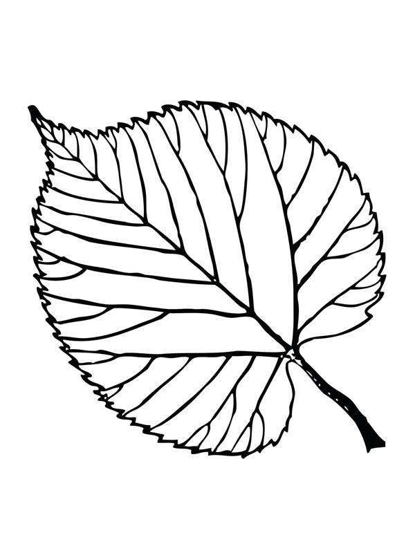 Bộ tranh tô màu lá cây dành cho bé tập tô làm quen nét 9