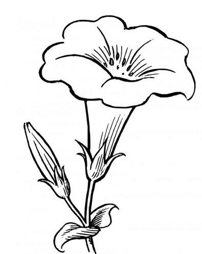 Bộ tranh tô màu hình các loài hoa đầy màu sắc 19
