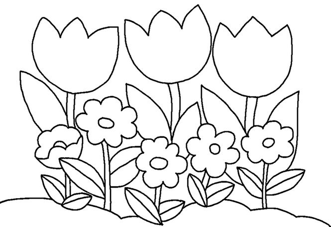 Bộ tranh tô màu hình các loài hoa đầy màu sắc 15