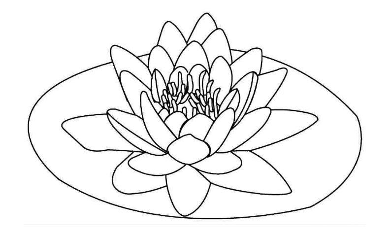 Bộ tranh tô màu hình các loài hoa đầy màu sắc 24