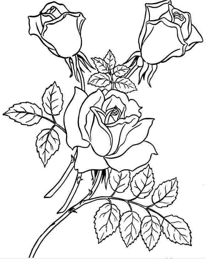 Bộ tranh tô màu hình các loài hoa đầy màu sắc 27