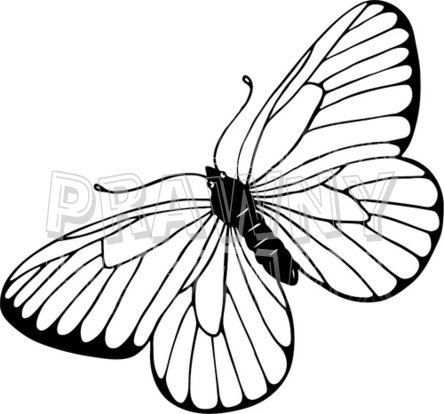 Tranh tô màu con bướm đẹp cho bé gái 57