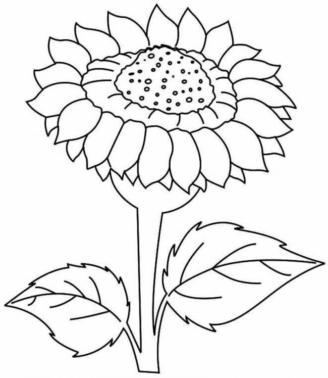 Bộ sưu tập tranh tô màu hoa hướng dương và biết ý nghĩa của hoa 20