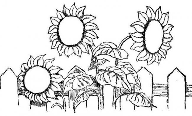 Bộ sưu tập tranh tô màu hoa hướng dương và biết ý nghĩa của hoa 21
