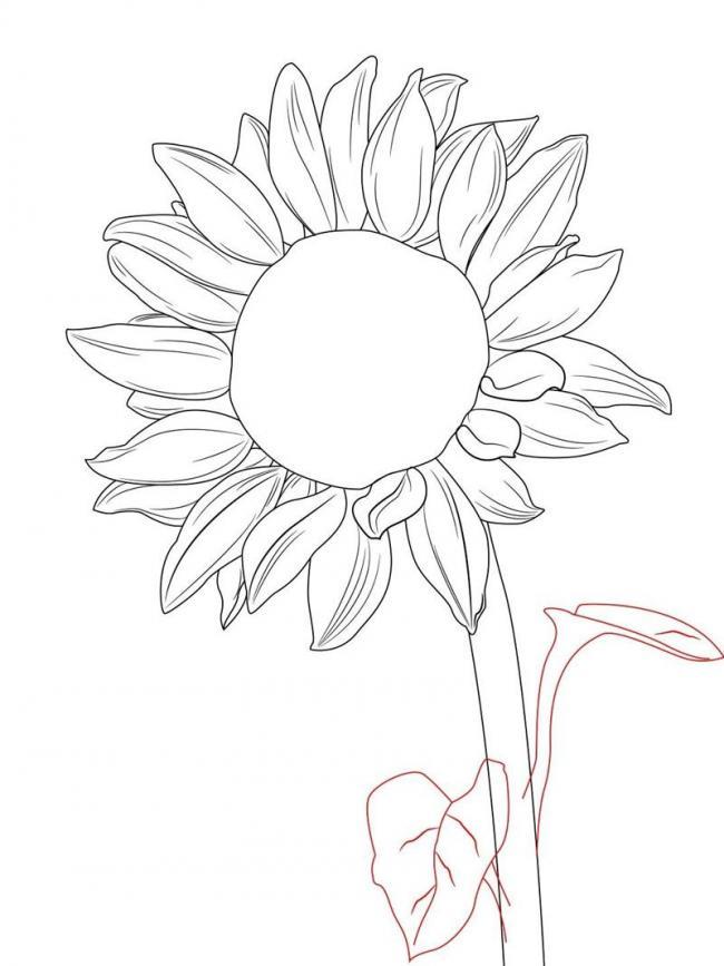 Bộ sưu tập tranh tô màu hoa hướng dương và biết ý nghĩa của hoa 15