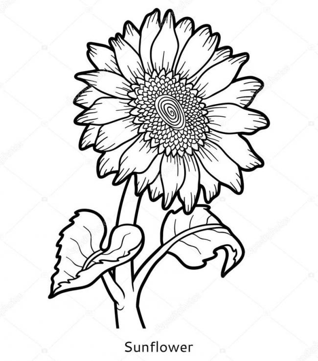 Bộ sưu tập tranh tô màu hoa hướng dương và biết ý nghĩa của hoa 16