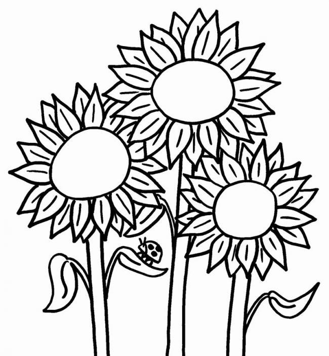 Bộ sưu tập tranh tô màu hoa hướng dương và biết ý nghĩa của hoa 17