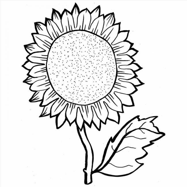 Bộ sưu tập tranh tô màu hoa hướng dương và biết ý nghĩa của hoa 19