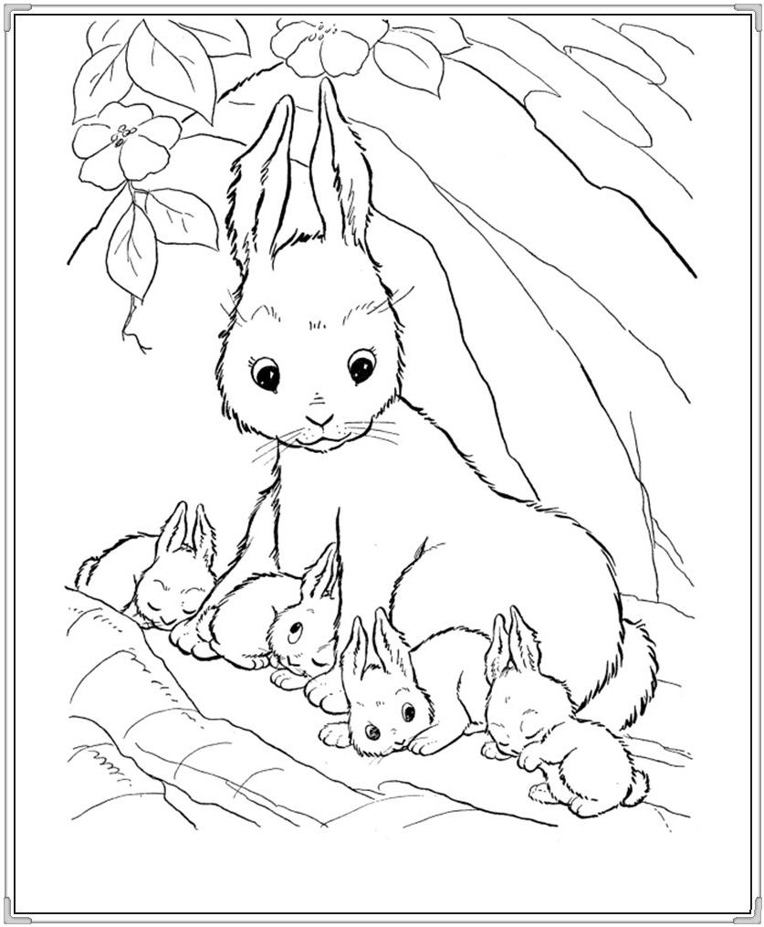 Bộ sưu tập tranh tô màu con thỏ ngộ nghĩnh đáng yêu 38