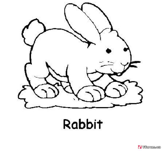 Bộ sưu tập tranh tô màu con thỏ ngộ nghĩnh đáng yêu 56