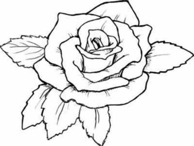 Download tranh tô màu hoa hồng cho bé được tải nhiều nhất 11