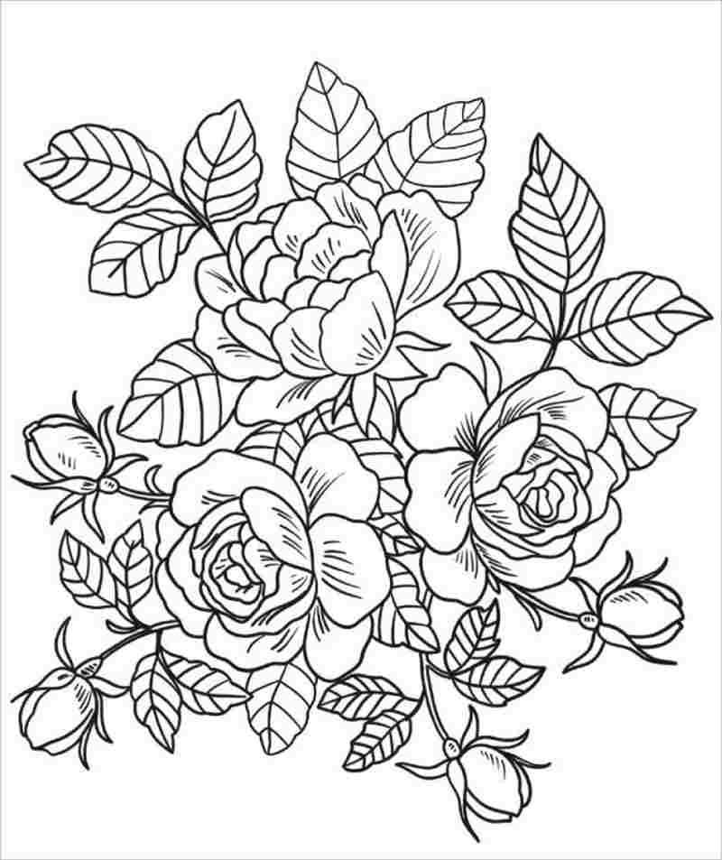 Download tranh tô màu hoa hồng cho bé được tải nhiều nhất 17