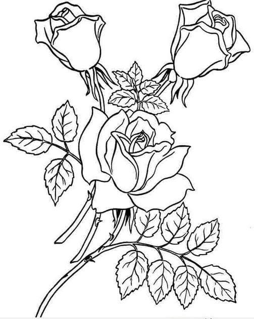 Download tranh tô màu hoa hồng cho bé được tải nhiều nhất 19