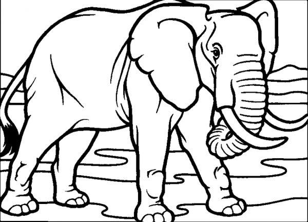 Bộ tranh tô màu con voi siêu ngộ nghĩnh 27