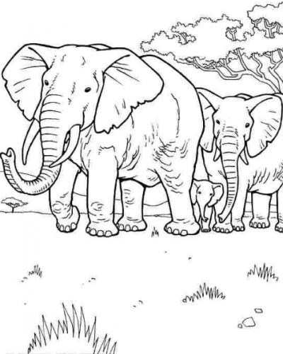 Bộ tranh tô màu con voi siêu ngộ nghĩnh 47