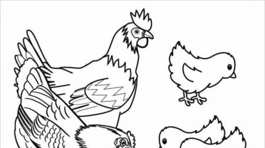 Bộ tranh tô màu con gà đẹp dành cho bé được tải nhiều nhất