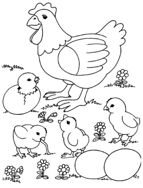 Bộ tranh tô màu con gà đẹp dành cho bé được tải nhiều nhất 16