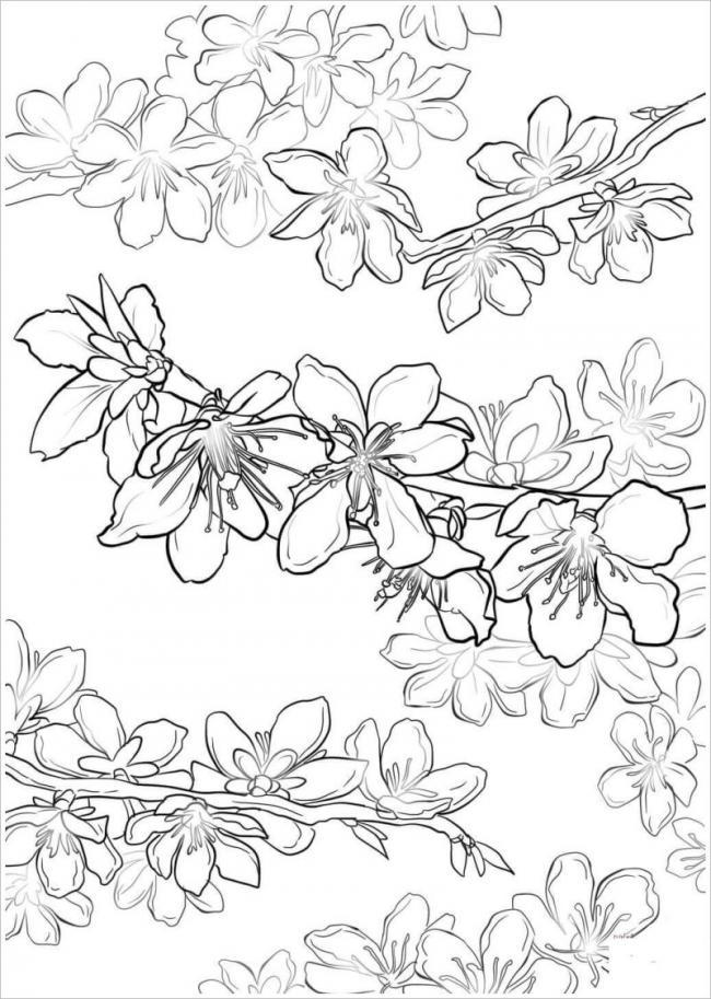 Tranh tô màu hoa đào hoa mai ngày Tết đẹp cho bé 27