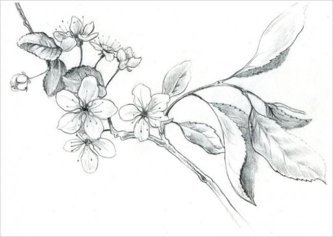 Tranh tô màu hoa đào hoa mai ngày Tết đẹp cho bé 20
