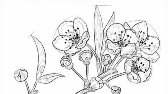 Bộ sưu tập tranh tô màu hoa mai cho bé dịp tết 2020!