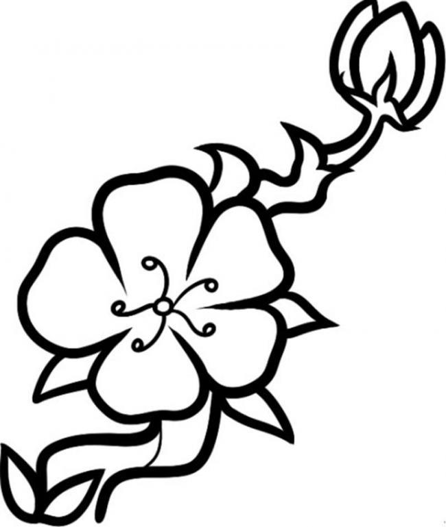 Tranh tô màu hoa đào hoa mai ngày Tết đẹp cho bé 33