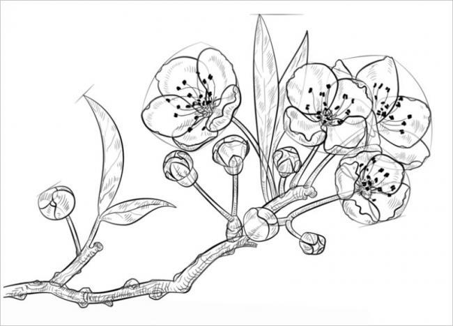 Tranh tô màu hoa đào hoa mai ngày Tết đẹp cho bé 29