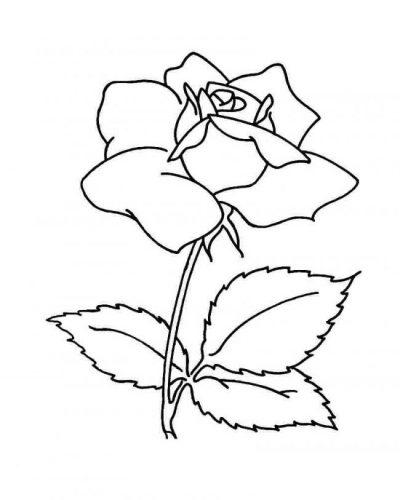 Tải tranh tô màu hình bông hoa đơn giản cho bé tập làm quen 13
