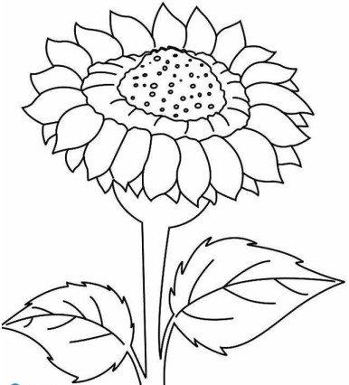 Tải tranh tô màu hình bông hoa đơn giản cho bé tập làm quen 11