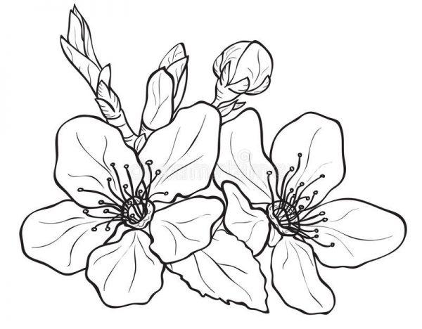 Tải tranh tô màu hình bông hoa đơn giản cho bé tập làm quen 14