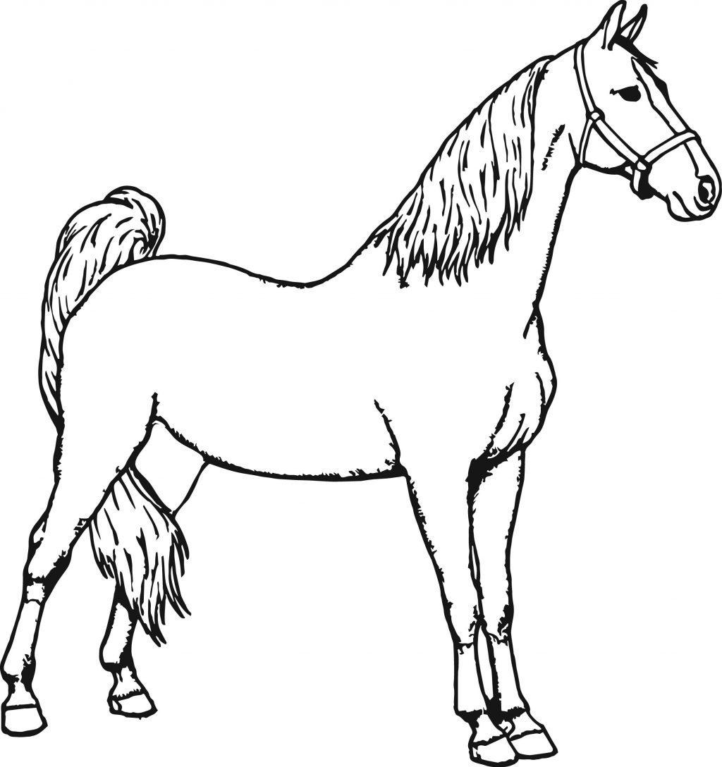 Bộ sưu tập tranh tô màu con ngựa dành tặng bé 45