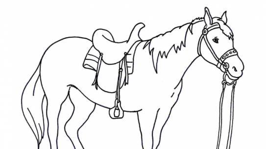 Bộ sưu tập tranh tô màu con ngựa dành tặng bé
