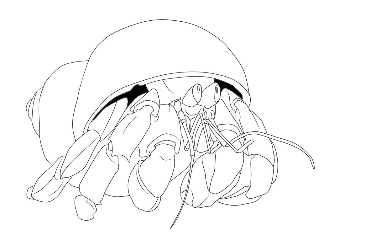 Bộ sưu tập tranh tô màu con cua cho bé khám phá thế giới đại dương 37